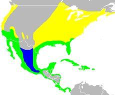 "<span class=""translation_missing"" title=""translation missing: en.medium.untitled.map_image_of, page_name: Butorides Blyth 1852"">Map Image Of</span>"