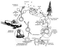 Image of Forest pathogen