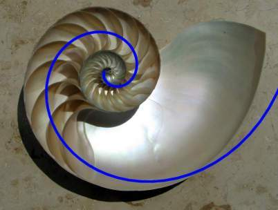 Image of nautiluses