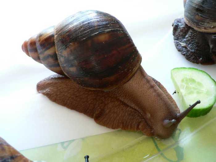 Image of naiara