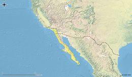 Map of Orange-throated Race-runner