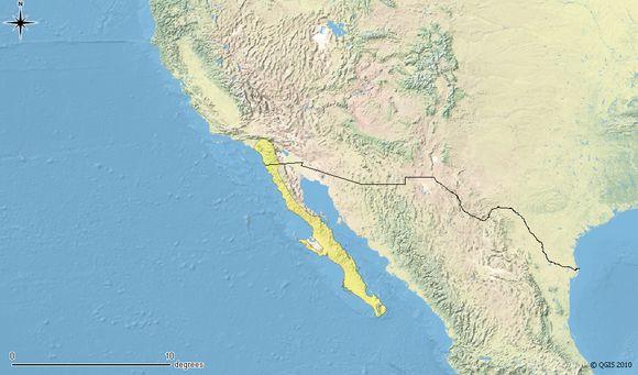 """<span class=""""translation_missing"""" title=""""translation missing: en.medium.untitled.map_image_of, page_name: &lt;i&gt;Aspidoscelis hyperythra&lt;/i&gt; (Cope 1864)"""">Map Image Of</span>"""