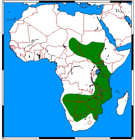 """<span class=""""translation_missing"""" title=""""translation missing: en.medium.untitled.map_image_of, page_name: Cape Pangolin"""">Map Image Of</span>"""