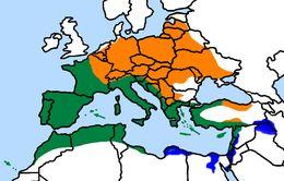 "<span class=""translation_missing"" title=""translation missing: en.medium.untitled.map_image_of, page_name: Serinus Koch 1816"">Map Image Of</span>"