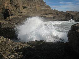 Image of New Zealand bull kelp