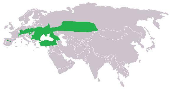 "<span class=""translation_missing"" title=""translation missing: en.medium.untitled.map_image_of, page_name: &lt;i&gt;Phengaris nausithous&lt;/i&gt;"">Map Image Of</span>"