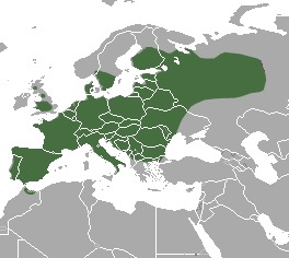 Map of European polecat
