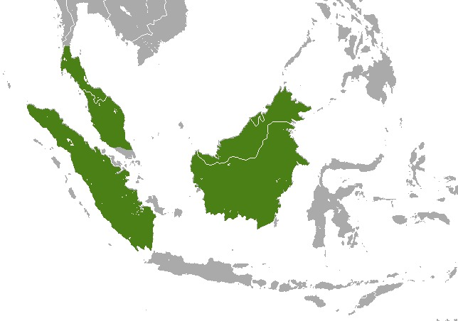 Map of Malay Weasel