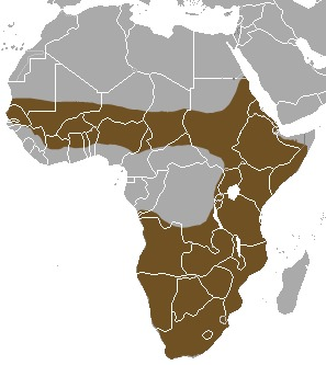 """<span class=""""translation_missing"""" title=""""translation missing: en.medium.untitled.map_image_of, page_name: Striped Polecats"""">Map Image Of</span>"""