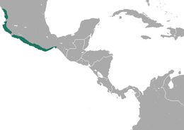 Map of Pygmy Spotted Skunk
