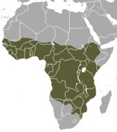 Map of African civet