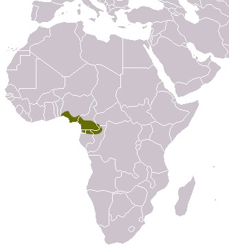 Image of Cameroon Cusimanse