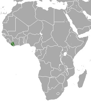 Image of Liberiictis kuhni