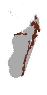Map of Eastern Falanouc