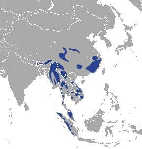 Map of Asian golden cat