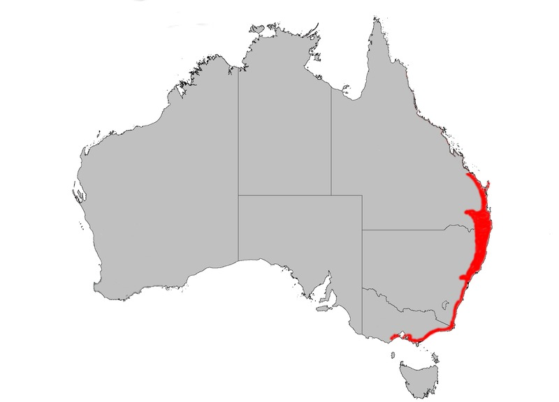 "<span class=""translation_missing"" title=""translation missing: en.medium.untitled.map_image_of, page_name: coast banksia"">Map Image Of</span>"