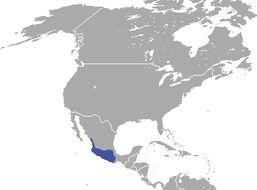"<span class=""translation_missing"" title=""translation missing: en.medium.untitled.map_image_of, page_name: Mexican Cottontail"">Map Image Of</span>"