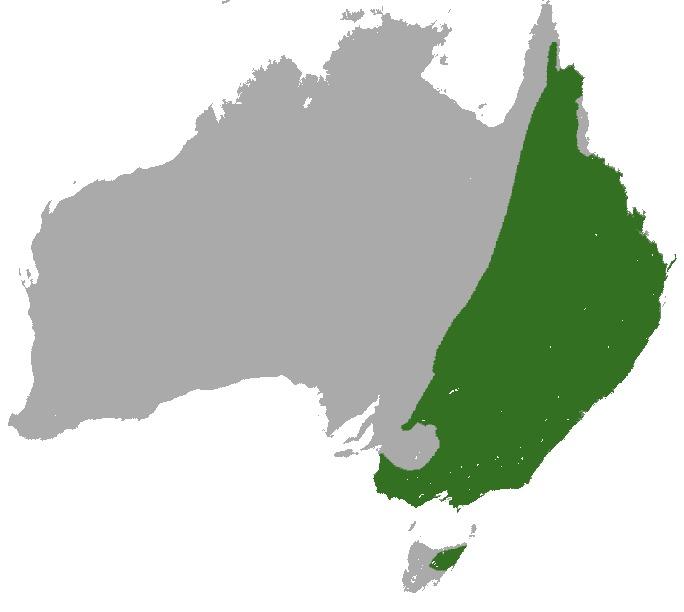 Map of Eastern Grey Kangaroo