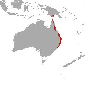 Map of Red-legged Pademelon