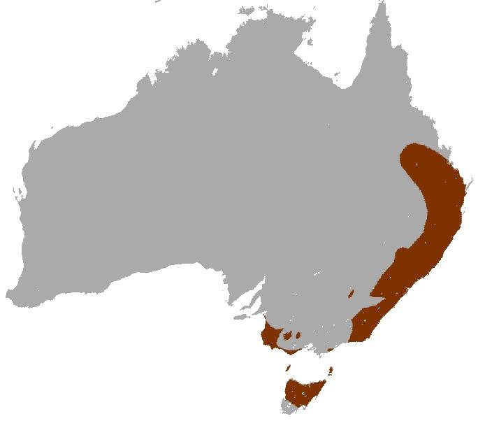 Map of Bennett's Wallaby