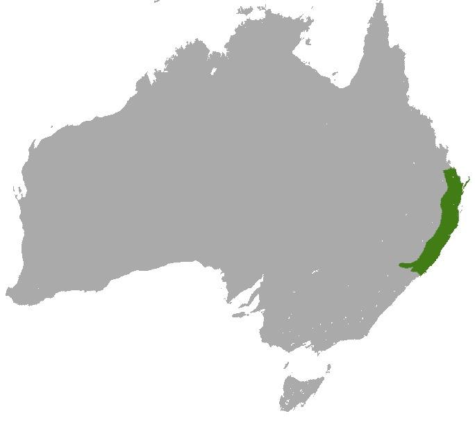 Map of Phalangeroidea