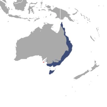 """<span class=""""translation_missing"""" title=""""translation missing: en.medium.untitled.map_image_of, page_name: Common Ring-tailed Possum"""">Map Image Of</span>"""