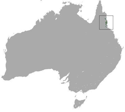 "<span class=""translation_missing"" title=""translation missing: en.medium.untitled.map_image_of, page_name: Green Ringtail Possum"">Map Image Of</span>"