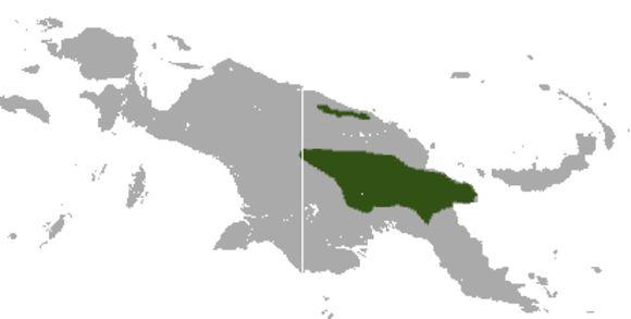 "<span class=""translation_missing"" title=""translation missing: en.medium.untitled.map_image_of, page_name: Masked Ringtail Possum"">Map Image Of</span>"