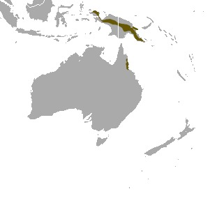 Map of pygmy possums