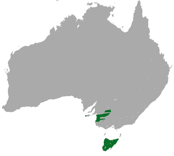 "<span class=""translation_missing"" title=""translation missing: en.medium.untitled.map_image_of, page_name: pygmy possums"">Map Image Of</span>"