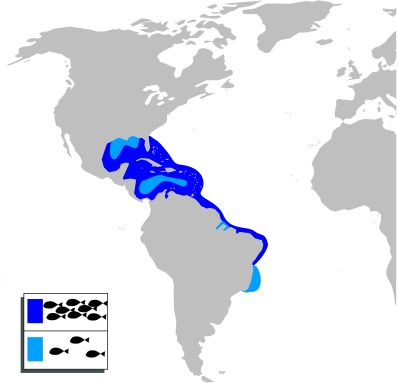 Map of Common Snook