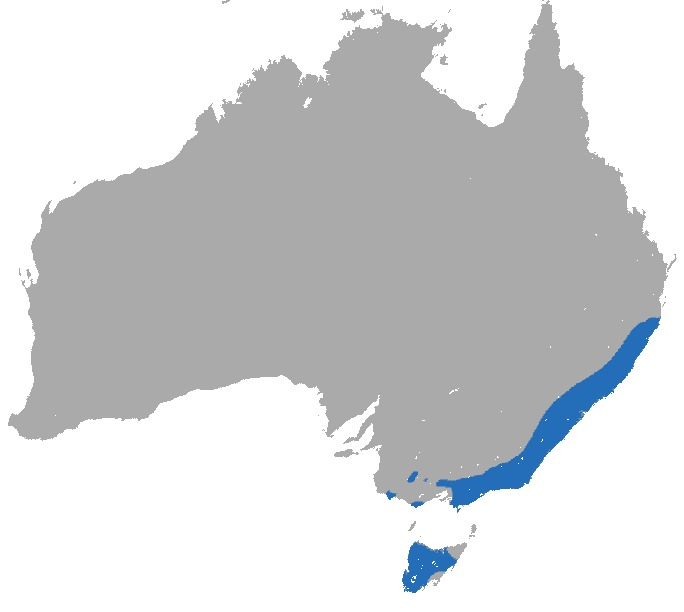 Map of Dusky Antechinus