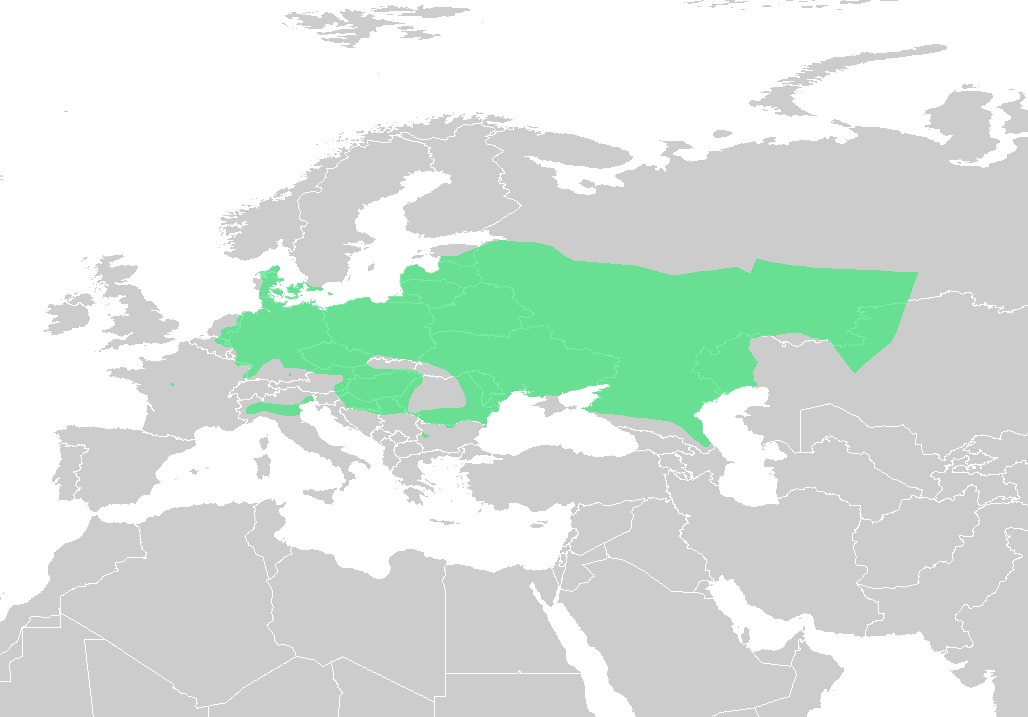 "<span class=""translation_missing"" title=""translation missing: en.medium.untitled.map_image_of, page_name: european spadefoot toads"">Map Image Of</span>"