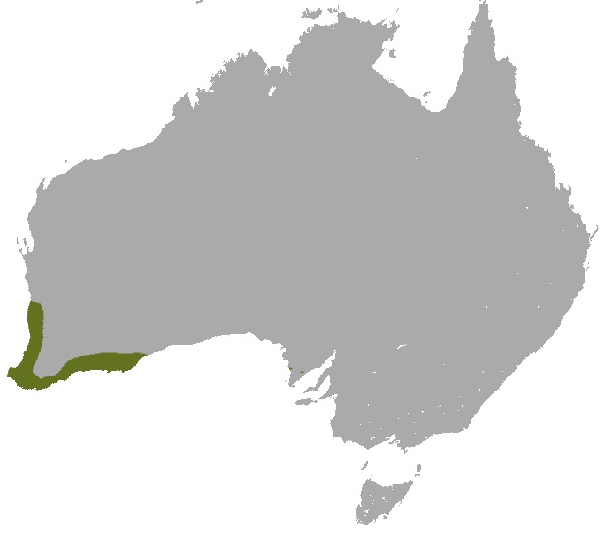 Map of Gray-bellied dunnart