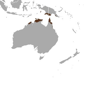 Map of Red-cheeked dunnart