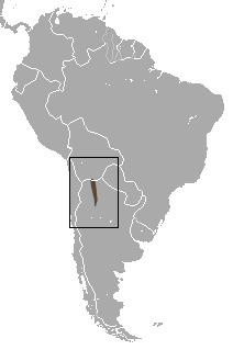 Image of <i>Thylamys cinderella</i> (Thomas 1902)