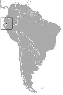 Image of Andean Caenolestid