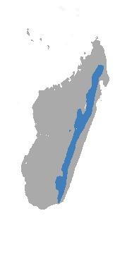 "<span class=""translation_missing"" title=""translation missing: en.medium.untitled.map_image_of, page_name: Gracile Shrew Tenrec"">Map Image Of</span>"