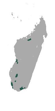 Map of Large-eared tenrec