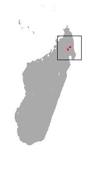 "<span class=""translation_missing"" title=""translation missing: en.medium.untitled.map_image_of, page_name: Montane Shrew Tenrec"">Map Image Of</span>"