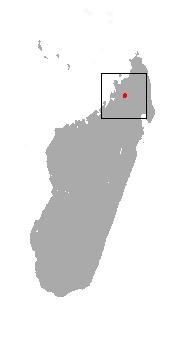 """<span class=""""translation_missing"""" title=""""translation missing: en.medium.untitled.map_image_of, page_name: &lt;i&gt;Microgale jobihely&lt;/i&gt;"""">Map Image Of</span>"""