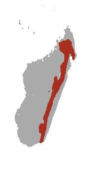 "<span class=""translation_missing"" title=""translation missing: en.medium.untitled.map_image_of, page_name: Shrew Tenrec"">Map Image Of</span>"