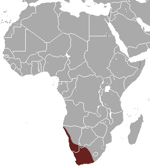 "<span class=""translation_missing"" title=""translation missing: en.medium.untitled.map_image_of, page_name: Karoo Round-eared Elephant Shrew"">Map Image Of</span>"