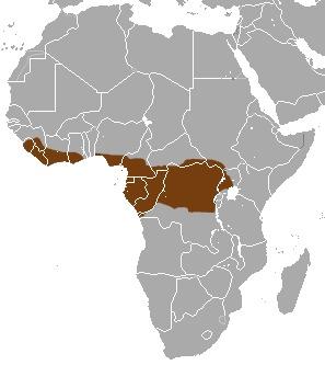 Image of Western Tree Hyrax