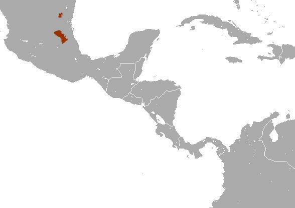 """<span class=""""translation_missing"""" title=""""translation missing: en.medium.untitled.map_image_of, page_name: Grizzled Mexican Small-eared Shrew"""">Map Image Of</span>"""