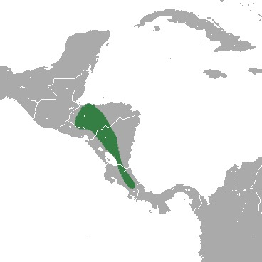 """<span class=""""translation_missing"""" title=""""translation missing: en.medium.untitled.map_image_of, page_name: Central American Least Shrew"""">Map Image Of</span>"""