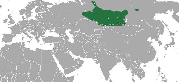 Image of Altai Mole