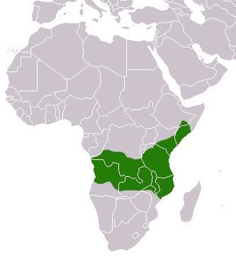 "<span class=""translation_missing"" title=""translation missing: en.medium.untitled.map_image_of, page_name: &lt;i&gt;Papio cynocephalus&lt;/i&gt; (Linnaeus 1766)"">Map Image Of</span>"