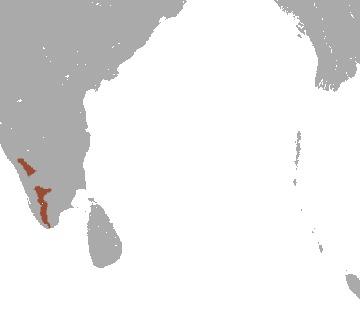 Image of <i>Trachypithecus johnii</i>