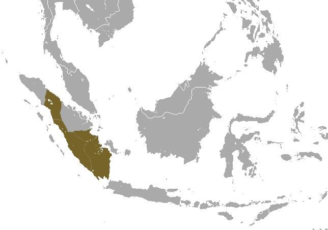 Image of Simpia